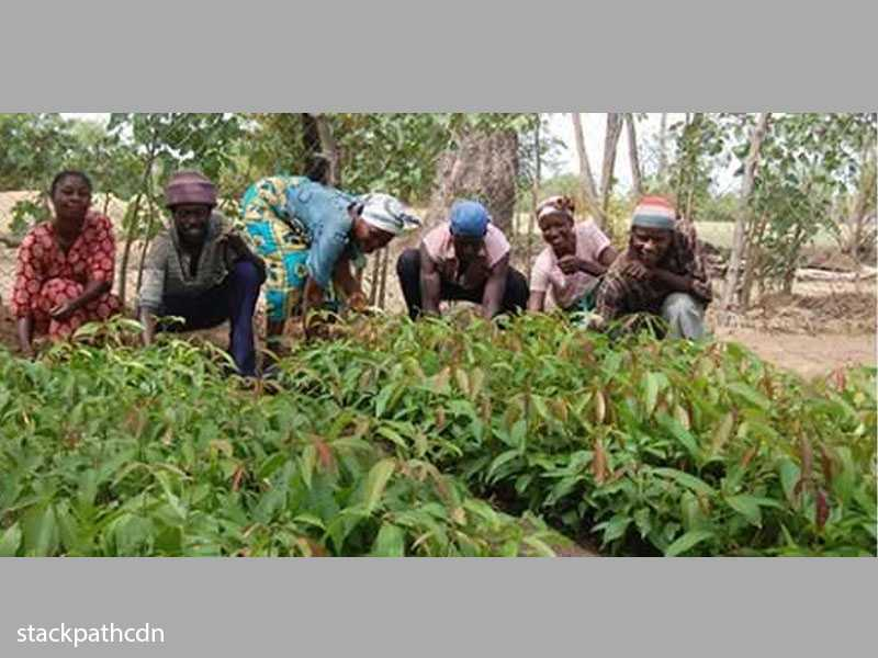 Akomadan vegetable farmers participate in a promotional trial of improved varieties